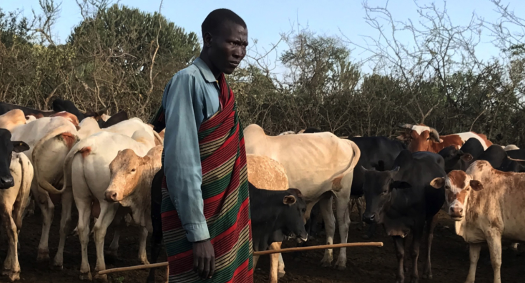 Enabling Migration Moves Pastoralists In Kotido, Karamoja, Uganda Towards Attaining Food Security