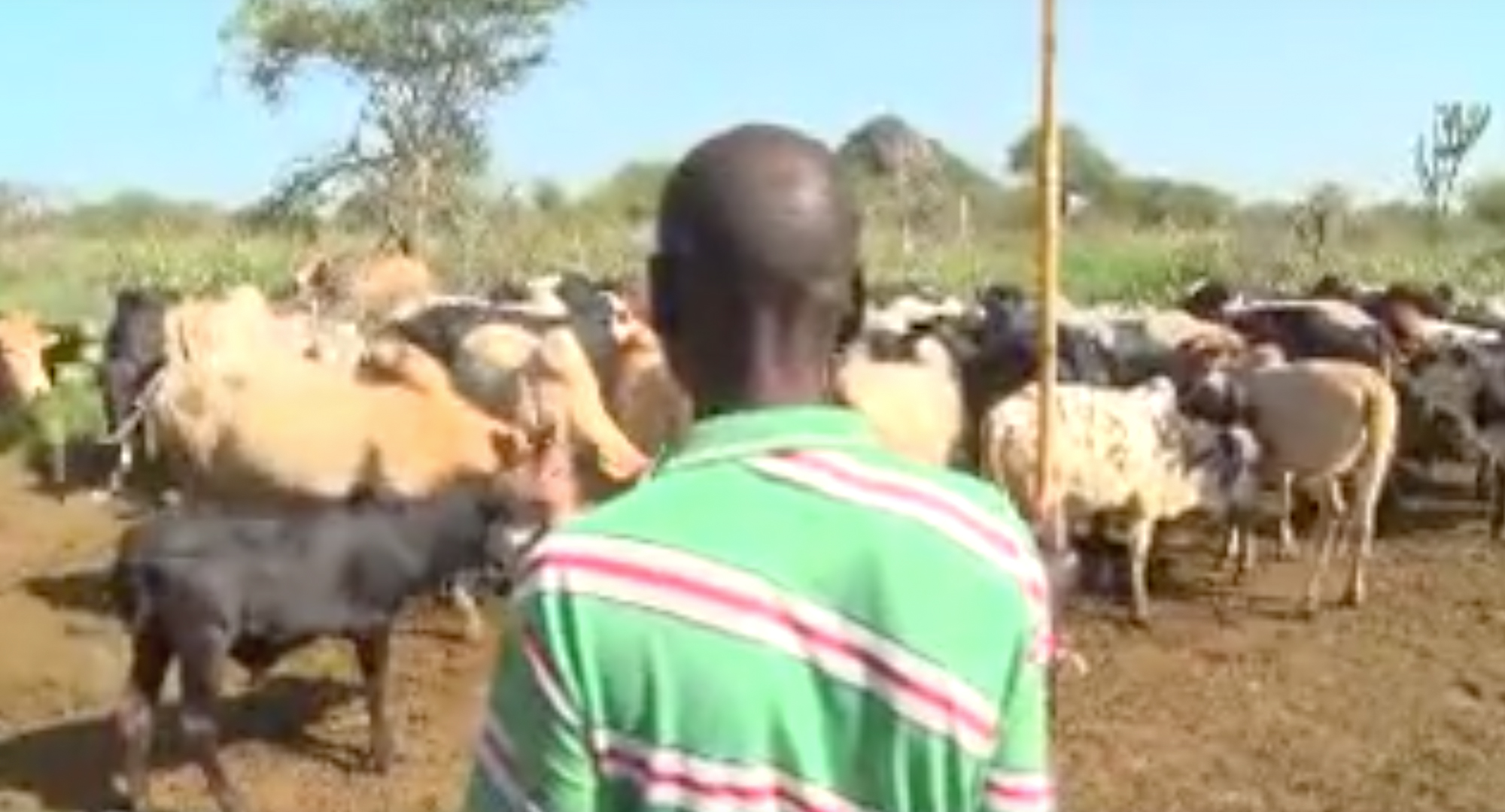 Pastoralism, Our Food Security Pillar